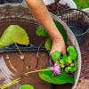 Удобрение для водных растений и корзины